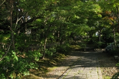 nice-is-kyoto-in-a-walk-330